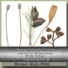 Brown Gum Nuts
