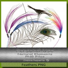 Natural Elements Feathers