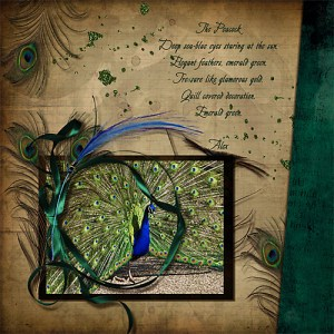 The Peacock by Terry